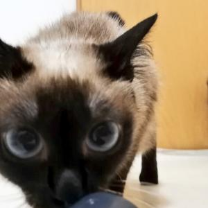 トイボブの猫ちゃん お風呂の日