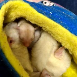 レッドクリミノ双子ベビーですよ❤️可愛い2人をご覧あれ〜❤️