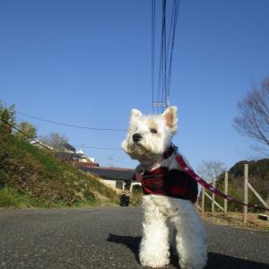 お散歩2時間超のスーパーロングコース(^^♪