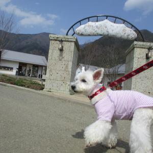 アンジェと富士山の麓へ②