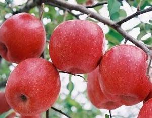 《りんご》11/30まで。全農福島 今月のプレゼント