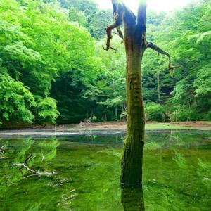 モリアオガエルに会いに東伊豆の秘境・シラヌタの池へ