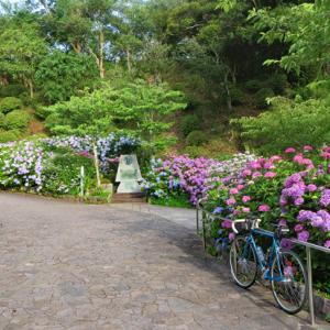 下田&稲取散策 紫陽花観賞とR135の裏道