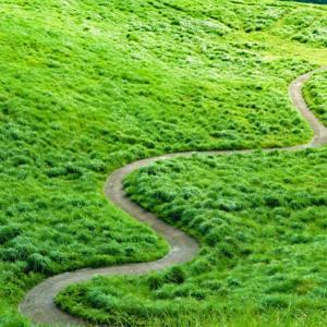 早朝の稲取細野高原・緑鮮やかな草原を駆け抜ける
