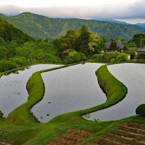 荒原の棚田と修善寺温泉の青モミジ