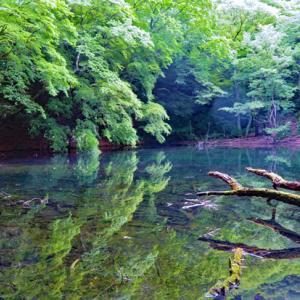 東伊豆の秘境散策 三筋山・オバケ杉・シラヌタの池・天城ハイランド