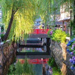 下田公園とペリーロードの紫陽花
