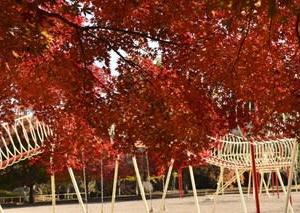 向山児童公園の紅葉