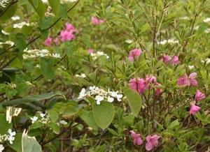 南蔵王縦走路に咲いてた花