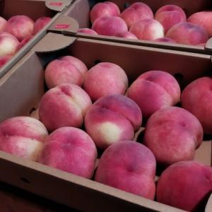 今年も福島の桃