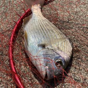 淡路島へ紀州釣り