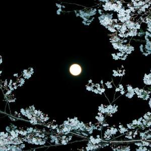 スパームーンと満開の桜
