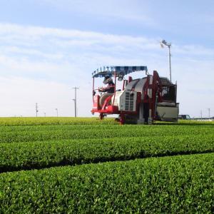 お茶刈りシーズン到来