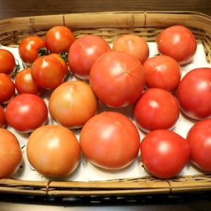 トマトのおすそ分け