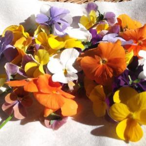 お花が身近なデイサービス 美穂の家