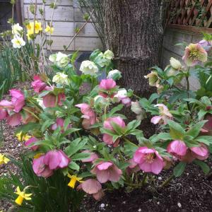見頃の花たち