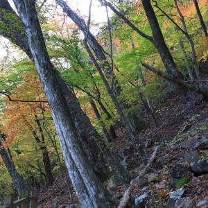 龍王峡の山の斜面の紅葉