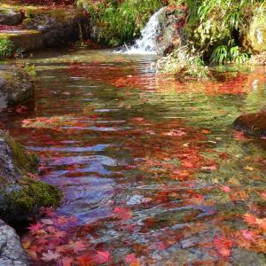 真っ赤な紅葉の落ち葉がたくさん沈んだ池