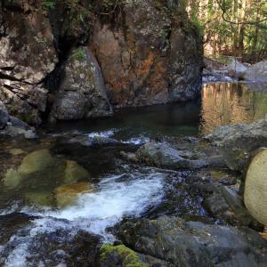 上流側から見た渓流の淀み