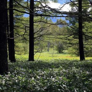 林の間から見えた明るい湿原
