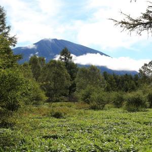林の間から見えてきた男体山の風景