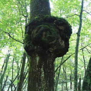 高感度撮影によって捉えられた木コブの威容