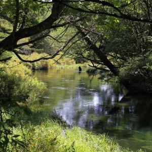 変わることなく美しかった湯川の一角