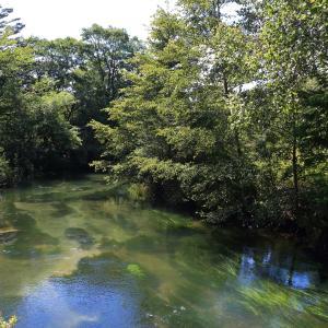 橋の上から見た湯川の下流