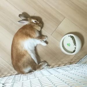 ウサギのつくねさんのお食事風景…ウサギの可愛い仕草ベストは…?