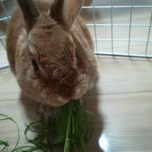 ウサギはかわいい…美しいということの価値