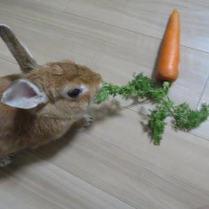 【ウサギ】つくねの健康診断と「ナイトフベン」