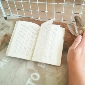 ウサギを読書台に、見返りはマッサージ。