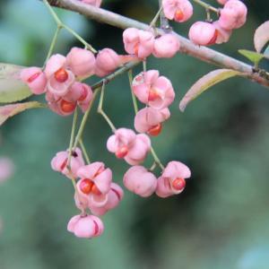 """いろいろな木の実を """"つまみ食い"""" しながらの自然観察会でした。"""