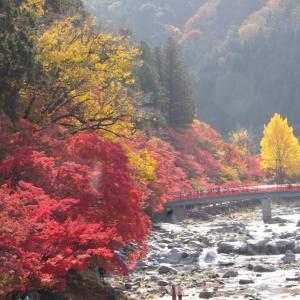 香嵐渓が秋の色に染まっています。