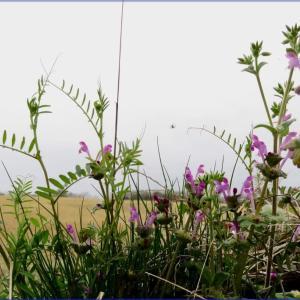 雑草と一緒に咲く花たち