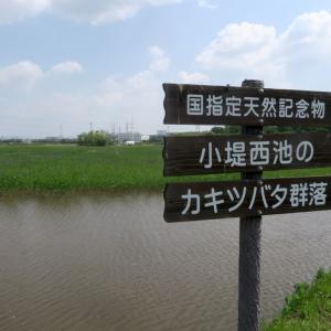 日本三大カキツバタ自生地とカワラヒワなどの野鳥
