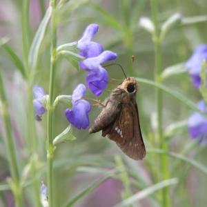 蝶たちの楽園