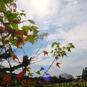 秋の空とジョウビタキとシジュウカラ
