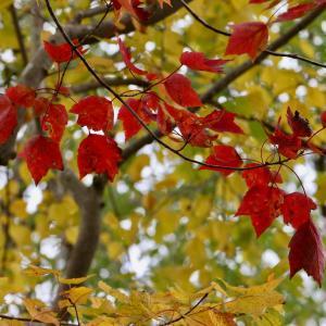 木の葉・それぞれの秋の色