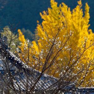 虎渓山永保寺の紅葉と黄葉