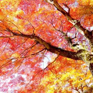 寒暖差の大きい山あいの町の紅葉は色鮮やかです。