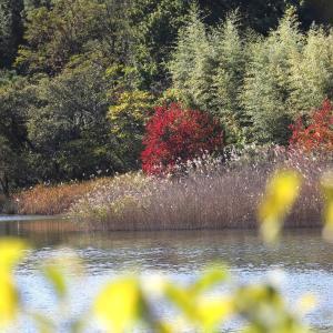 愛知池秋の風景と水鳥たち
