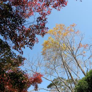 紅葉や木の実を観察しながら昭和の森を歩く