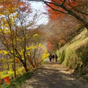 小原の山里を埋めつくす秋の色