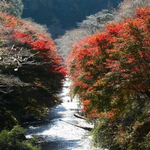 柿ケ入遊歩道と松月寺