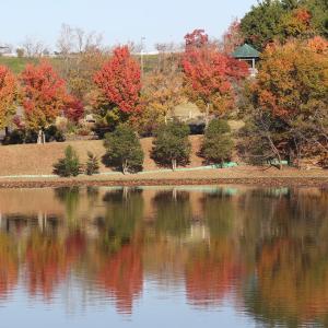 秋の色を映す池のマガモやヒドリガモなどの水鳥