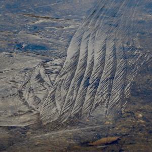 自然の造形美 氷紋