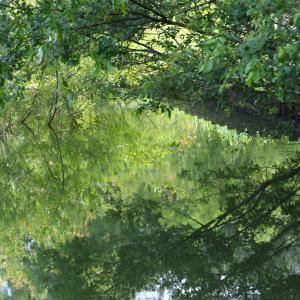 新緑を水に映して