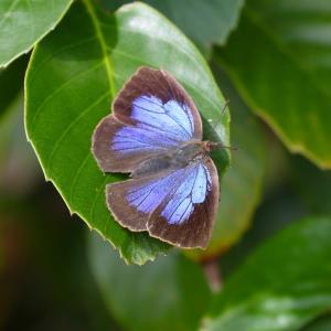 丸っこい体を揺すって花から花へと...