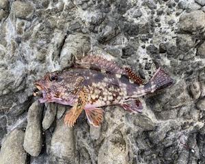 磯で根魚を狙ったけど・・・(石川県 外浦)